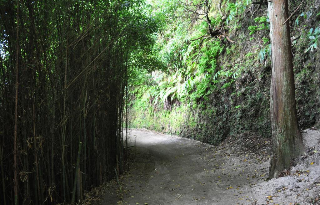 Bambus Furnas
