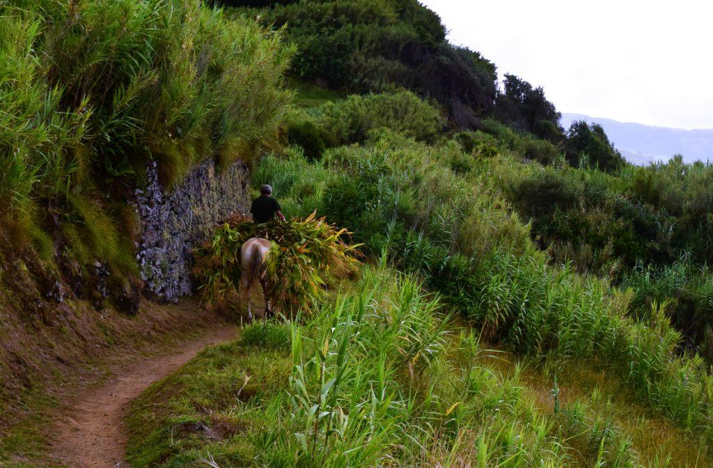 Harvest near Maia