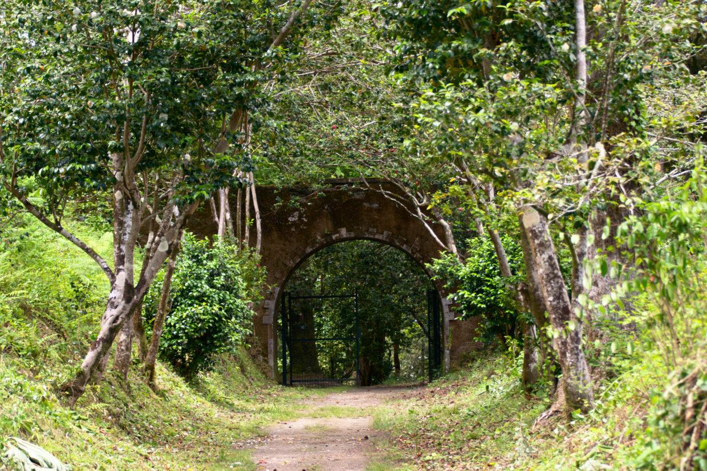 Passageway Mata Jardim José do Canto to the Salto do Rosal