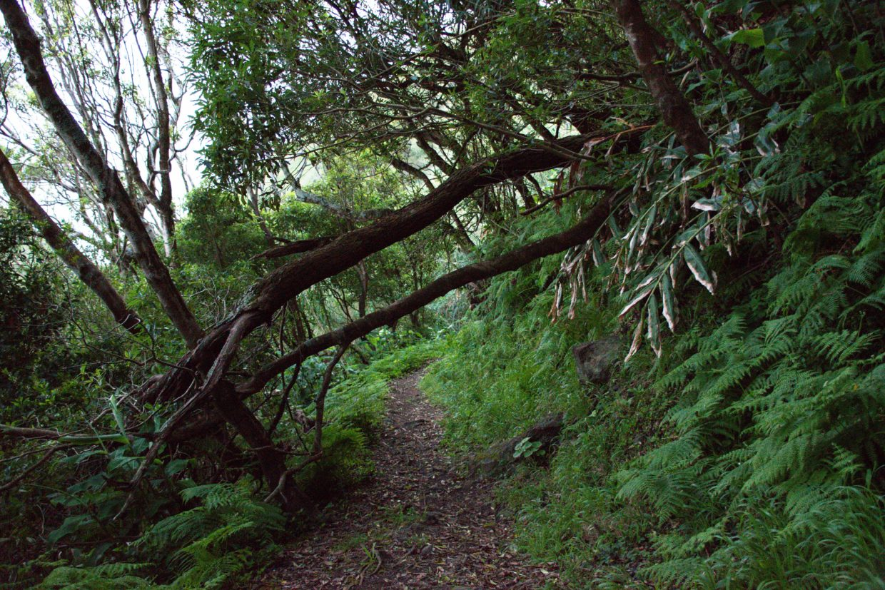 Overgrown and full of toppled trees, this path seems quite spooky especially during dawn.