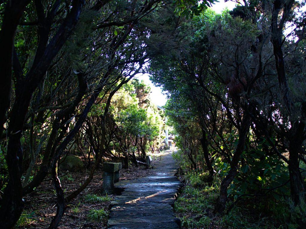 Path at the Miradouro do Endémico do Pelado in the sunset