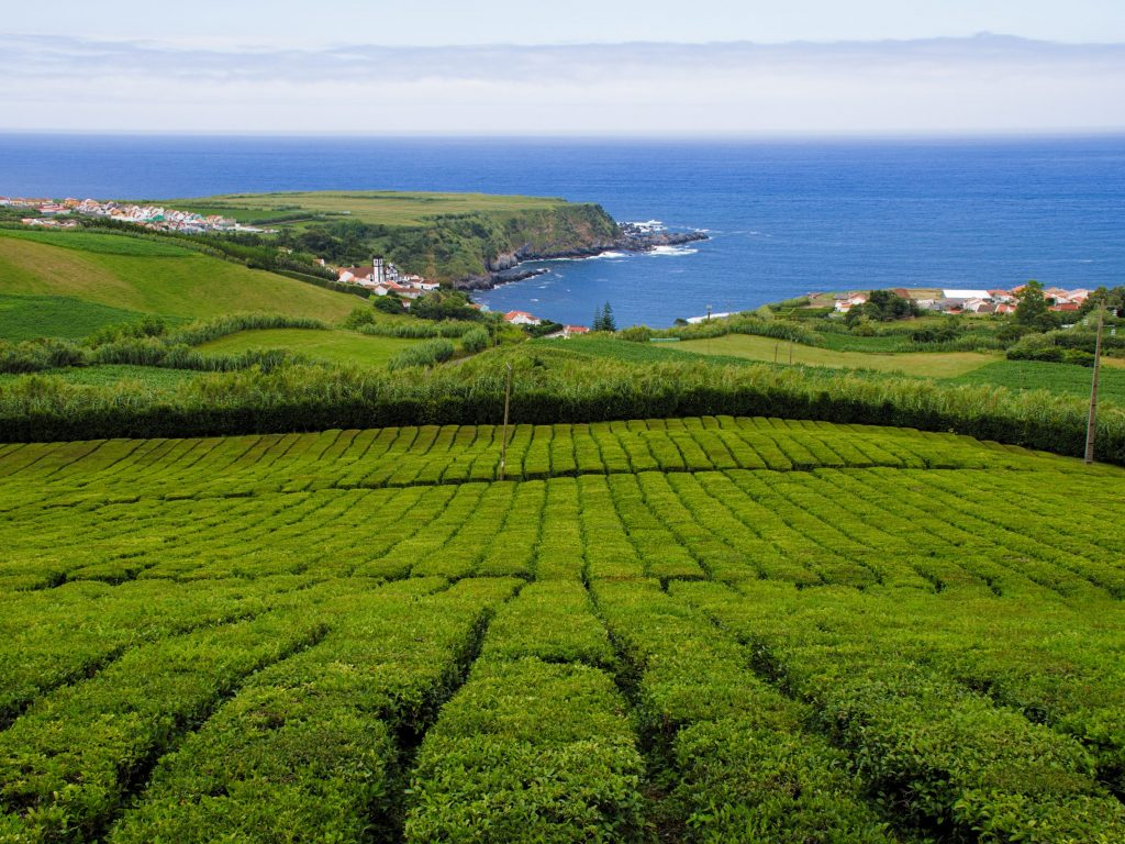 "Tea plantation ""Chá Porto Formoso"" by the ocean and Porto Formoso"