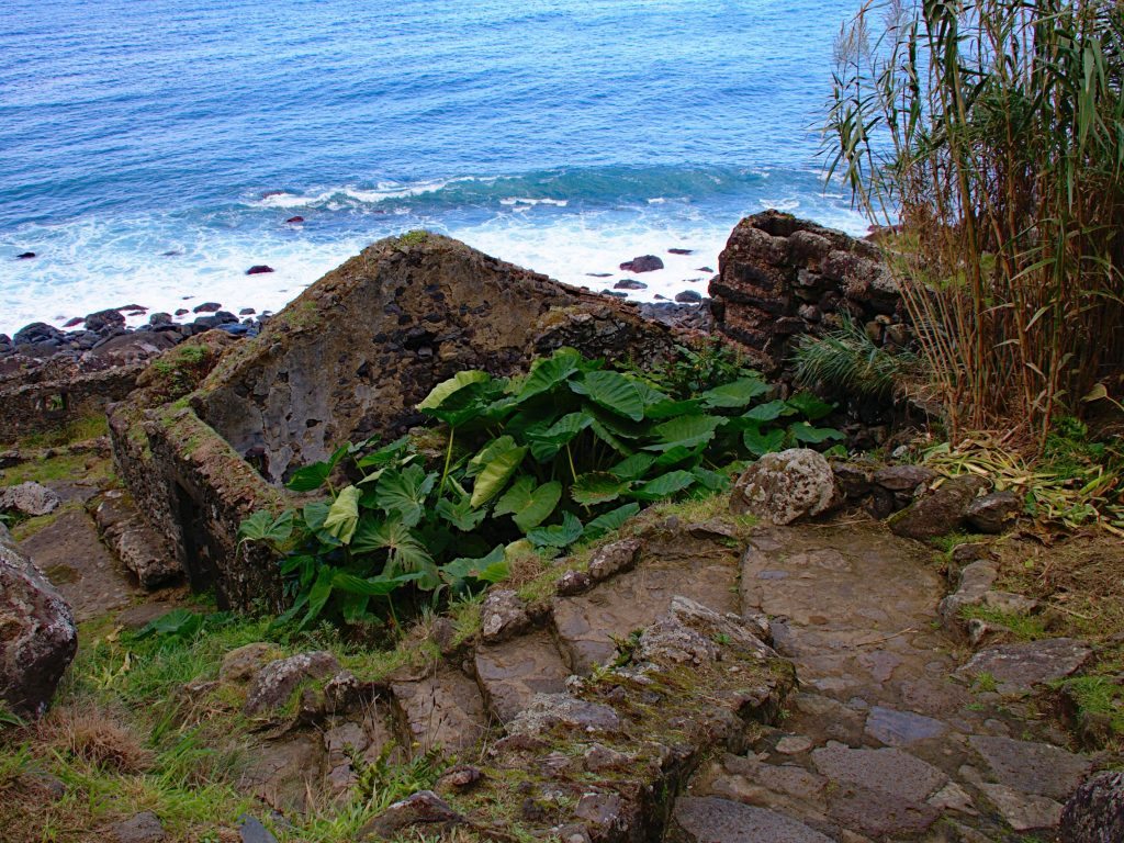 Steep steps down to the Praia da Viola across the densely overgrown ruin of the watermill.