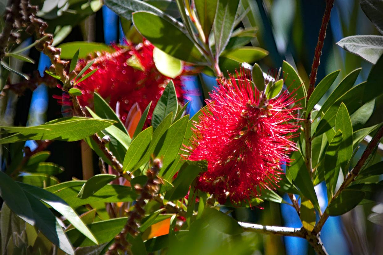 Flowers in the Jardim da Ribeira do Guilherme