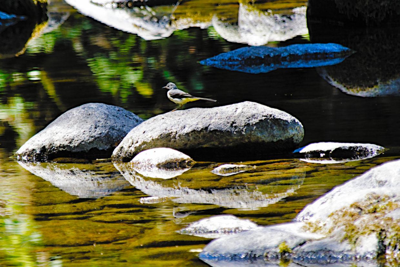 Bird by the Ribeira do Guilherme