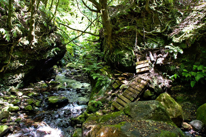 Even the path along the Ribeira do Faial da Terra is constantly changing.